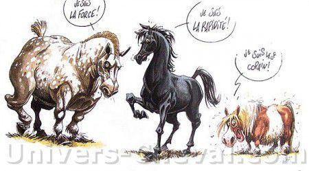 Dessins rigolos quitation 1 forum cheval - Cheval rigolo ...