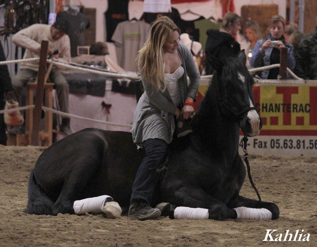Salon d 39 albi 2012 8 forum cheval for Salon du cheval albi
