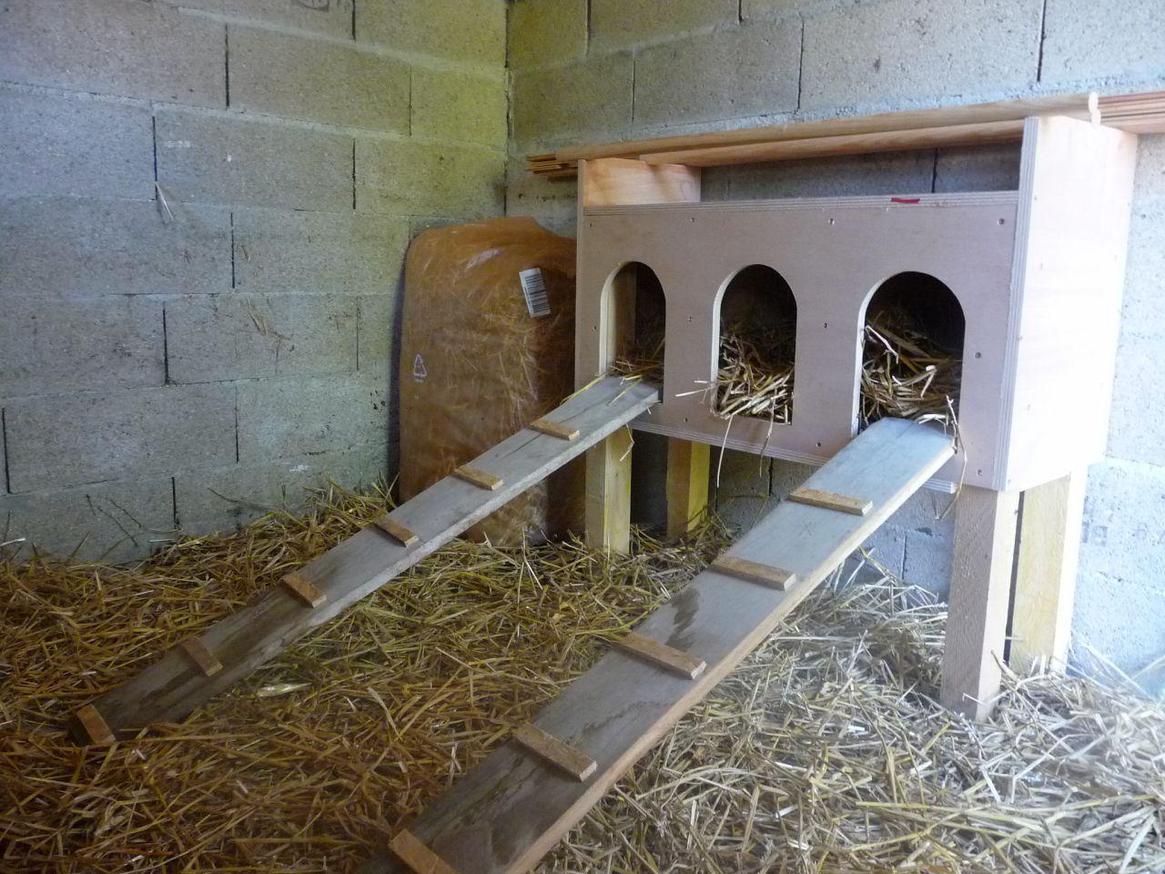 Soucis poules 1 forum cheval for Maison pour les poules