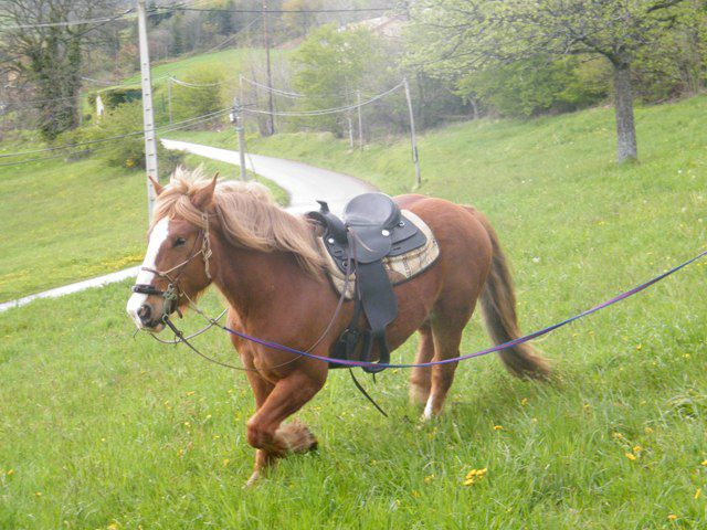 cheval de trait western