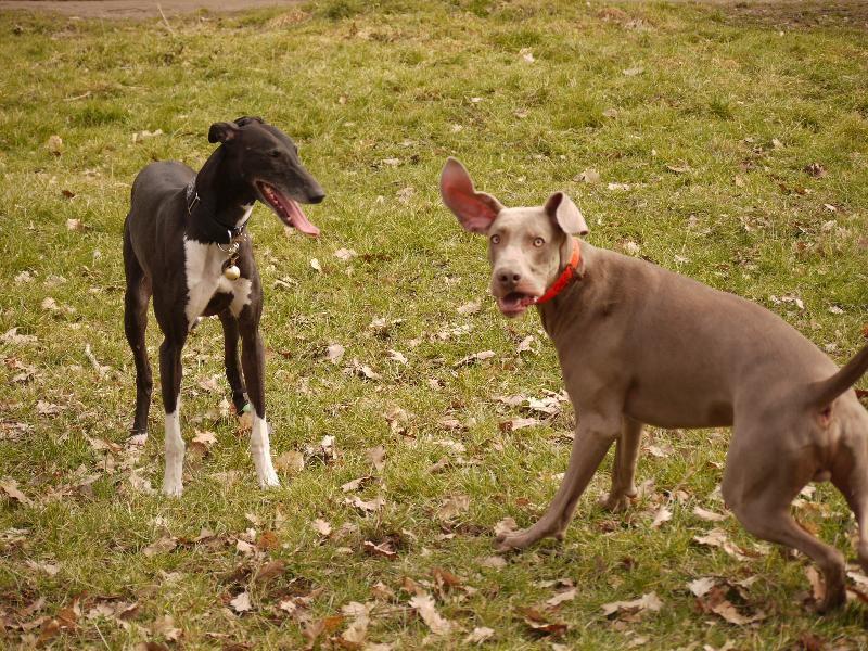 L'équitation et les chiens - page : 1