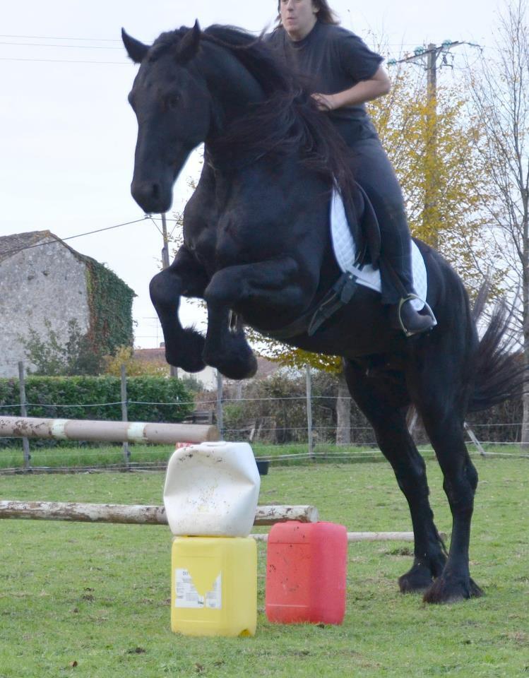 Frison ou arabo frison 2 forum cheval - Frison qui saute ...