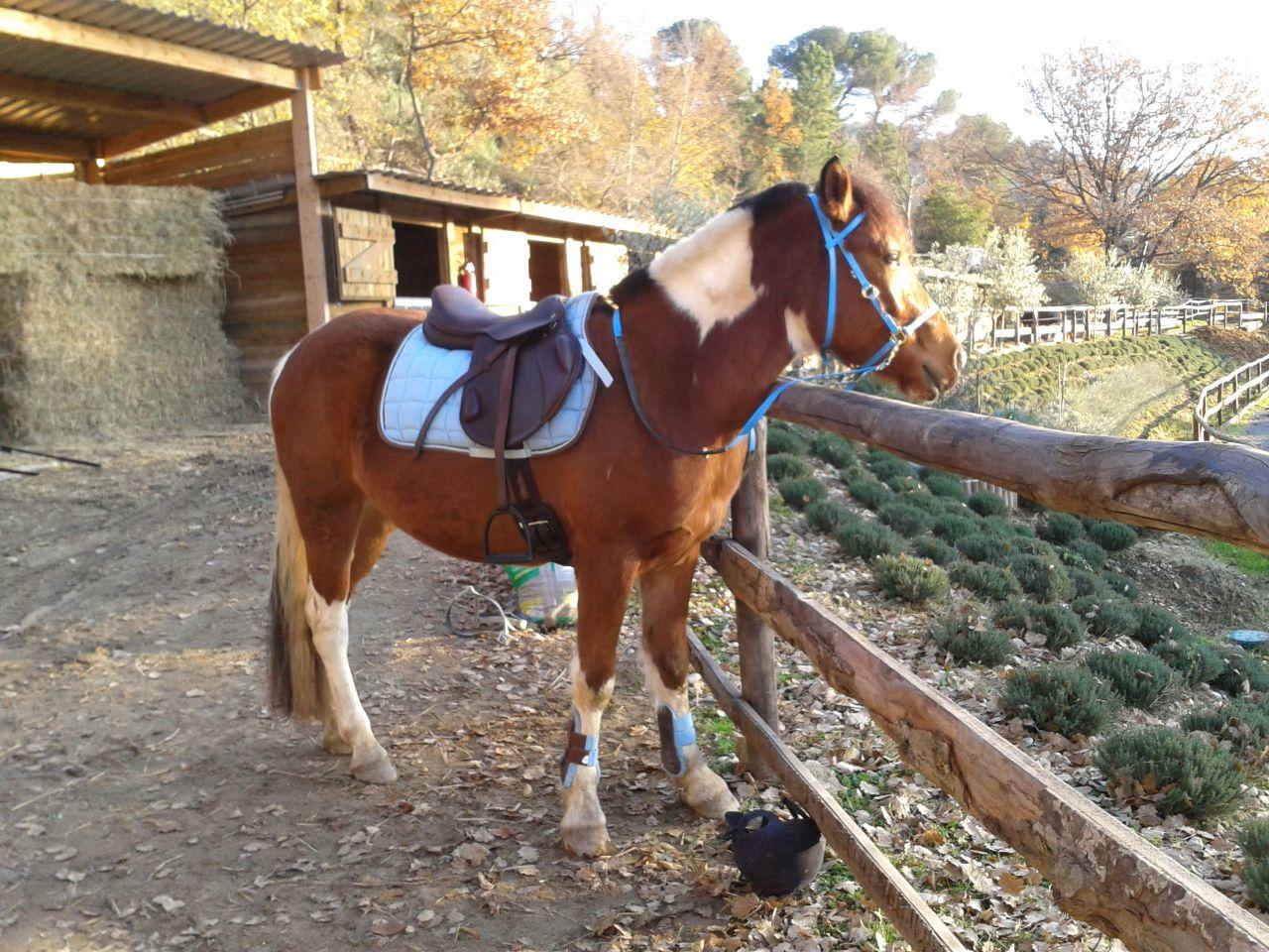 poney 1m35