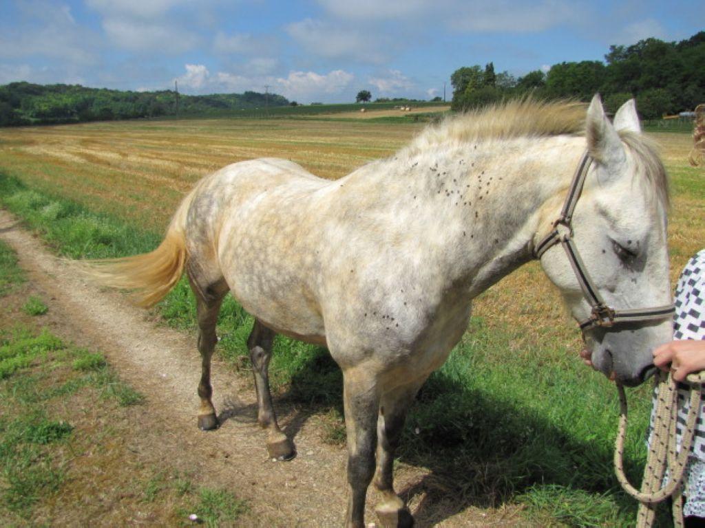 Besoin d 39 aide pour l 39 achat d 39 une selle 1 forum cheval for Aide pour l achat d une maison