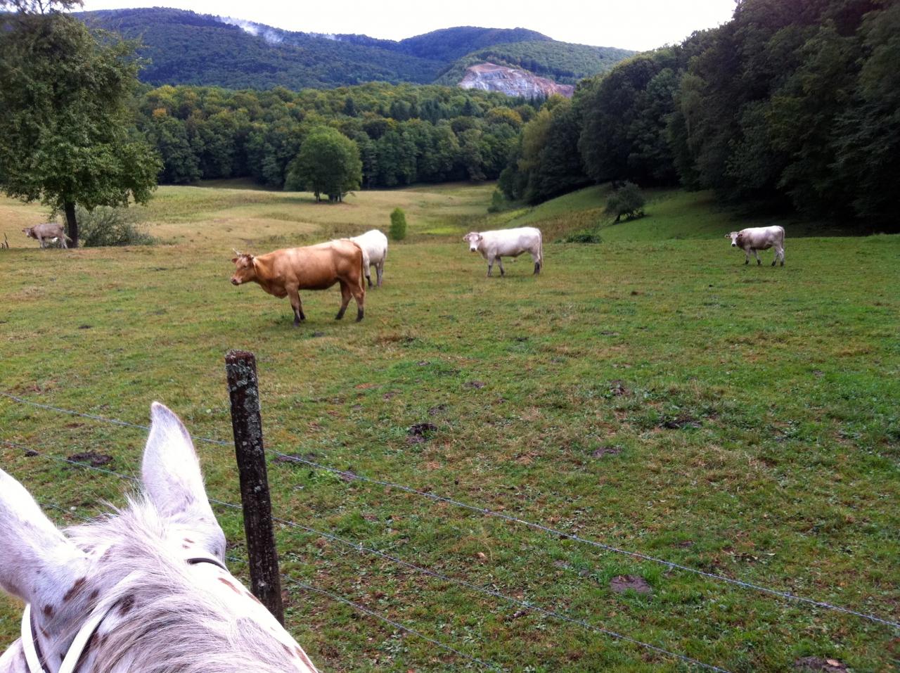 Princesse et bretzel 1 forum cheval - Paiement dans trois mois ...