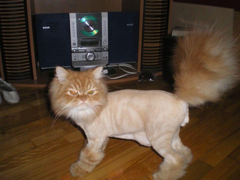 Trouv chat de race puc mais proprio injoignables 2 forum cheval - Mes chats ont des puces ...