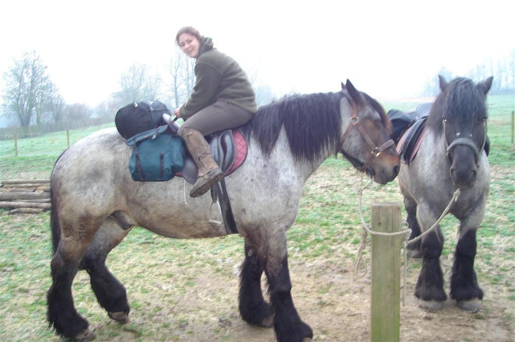 cheval de trait pour randonnee