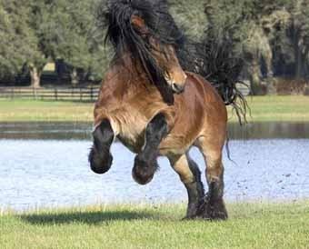 cheval de trait magnifique