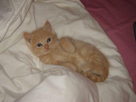 Pour les amoureux des chats 36529