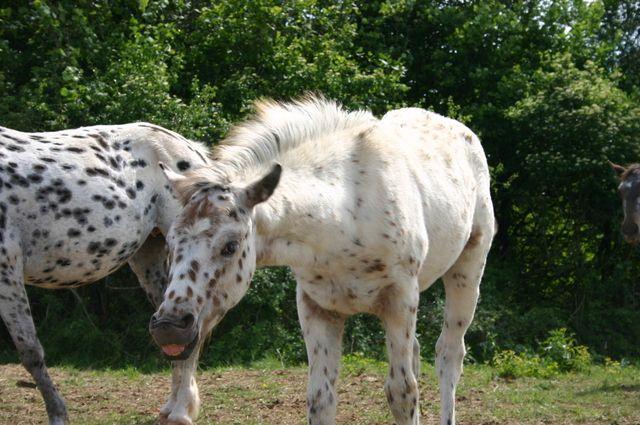Attitudes et mimiques des chevaux à Belook 40154