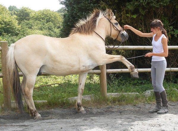 Horse Passion 43324