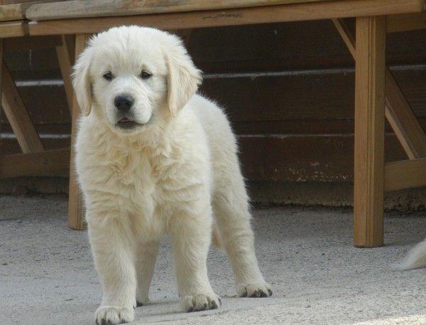 Co t d 39 un chien et autres questions 3 forum cheval for Cout d un chien assis