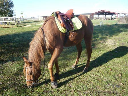 Couleur tapis de selle pour alezan 1 forum cheval Tapis cheval vert pomme