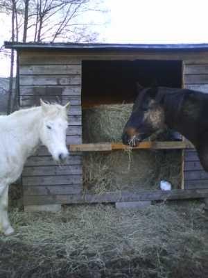cheval qui tousse...foin bof...va devoir trouver un autre fournisseur de foin.... 52971