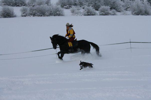 D 'hiver Cheval Forum 1 Quelle Veste qUwCvf