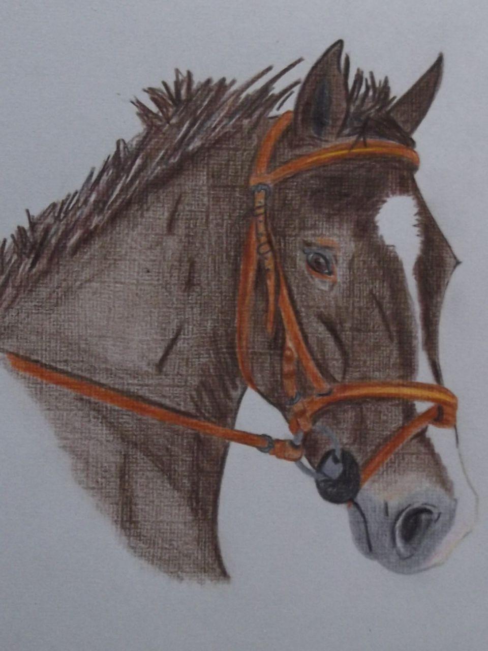 Dessin au crayon papier 54 forum cheval - Cheval dessin couleur ...