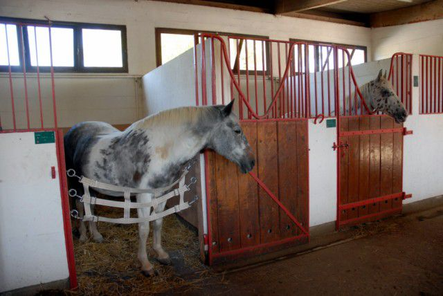 Il Tape à La Porte De Son Boxe Protection Forum Cheval - Porte box chevaux