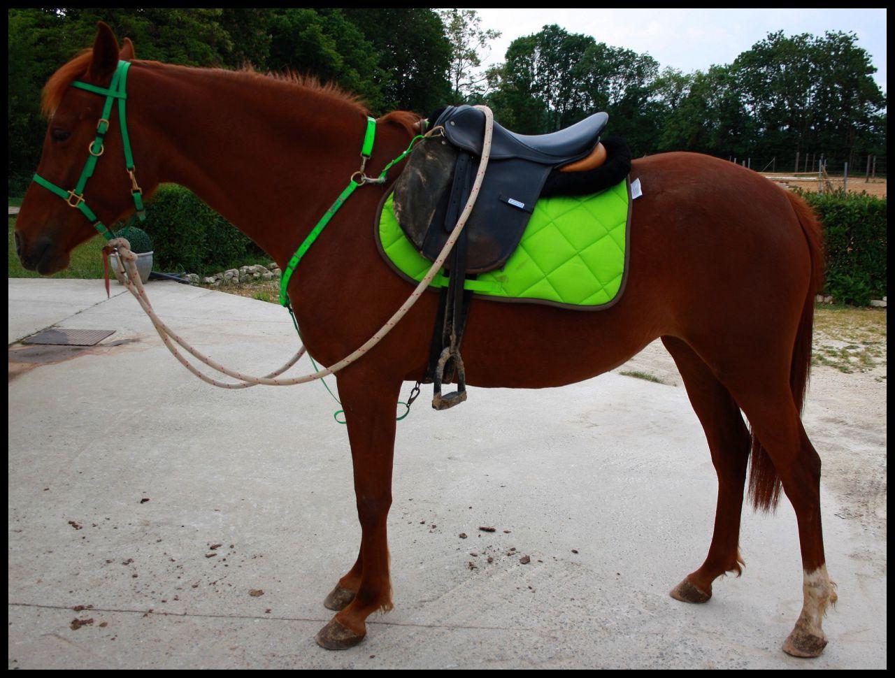 Quelle couleur sur un cheval alezan 1 forum cheval Tapis cheval vert pomme
