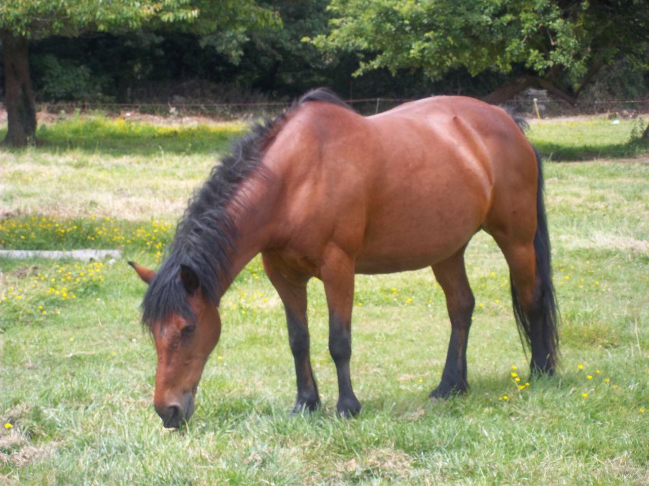 fourbu ou gratte lequel est sauvable 1 forum cheval. Black Bedroom Furniture Sets. Home Design Ideas