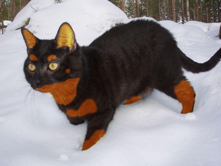 Le Beauceron chien dangereux - 2 - Forum Cheval