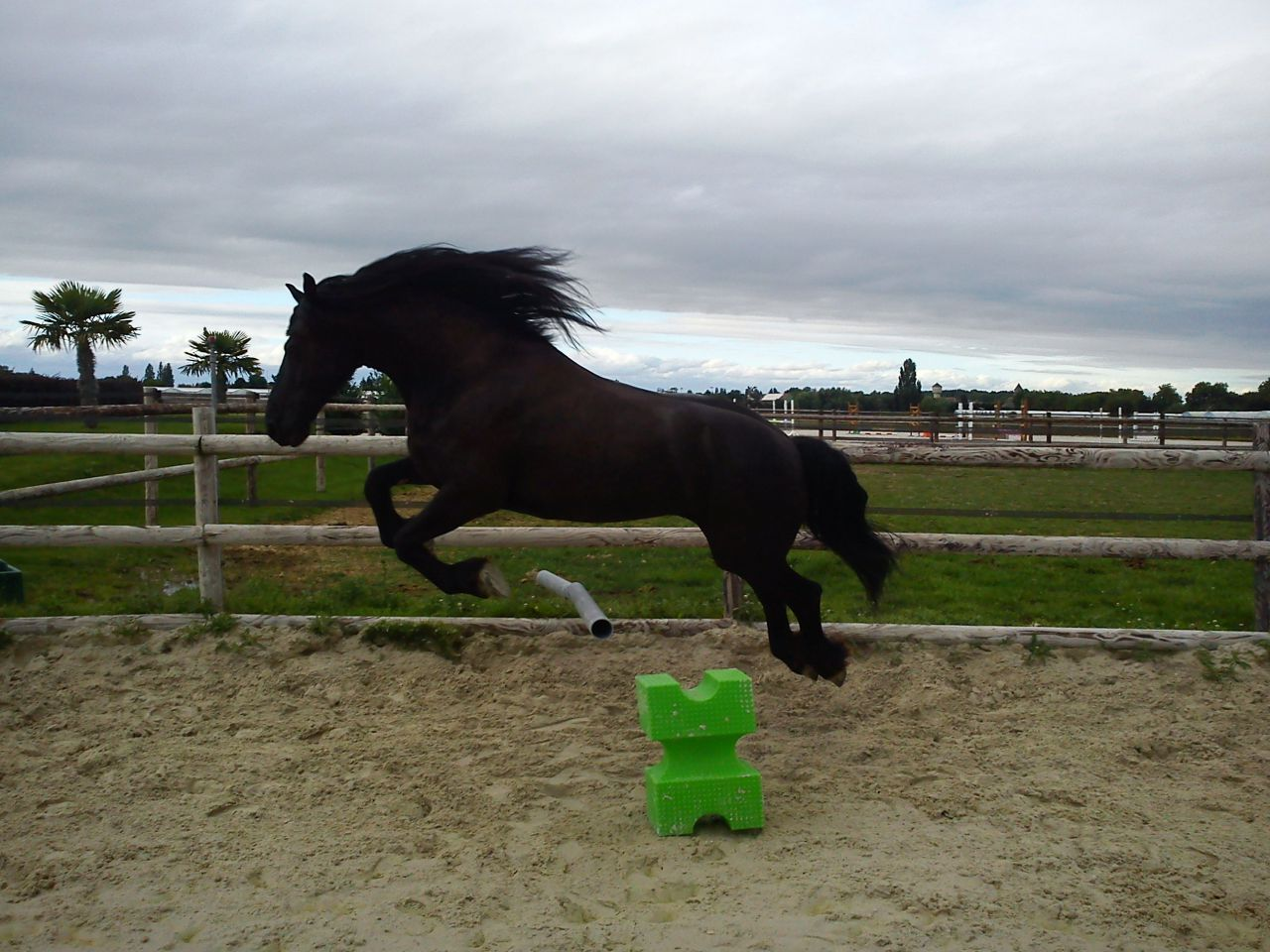 Si toi aussi tu as un cheval dou en cso 10 forum cheval - Cheval qui saute dessin ...