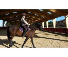 Vend beau cheval anglo-espagnol