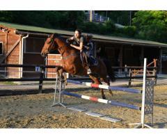 Cheval (trotteur) 7 ans CSO