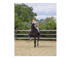 Cherche DP Galop 6 mini pour cheval très bien dressé