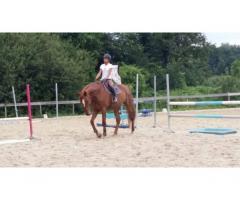 cheval à prendre en demi pension