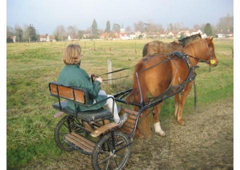 Vend carriole / attelage / sulky pour poney C ou D