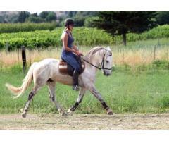 Cheval hongre 4 ans Camargue x Lusitanien