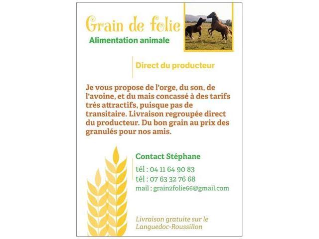 Grain pour chevaux