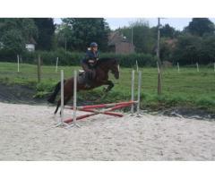 Superbe poney de sport