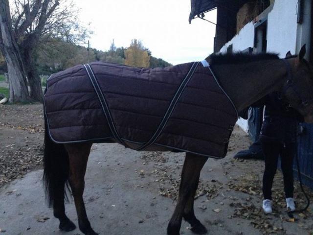 Couverture de Box GALOP'HORSE 300g Choco - 135 cm