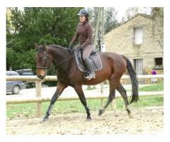 Super cheval polyvalent