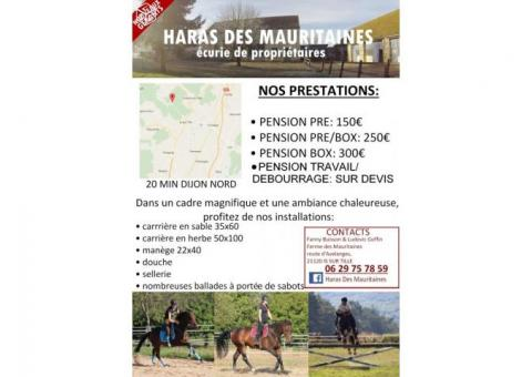 pensions chevaux poney