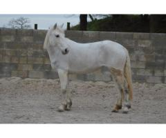 Jument poney PENNY 6 ans