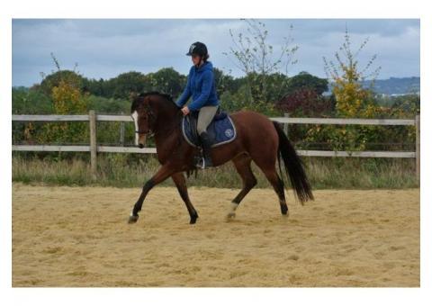 Débourrage et valorisation jeunes chevaux