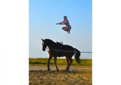 Voltige Equestre