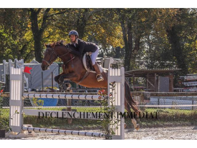 Jument de 8 ans idéale pour GP115 et transition poney/cheval