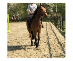 Recherche cheval ou poney à confier