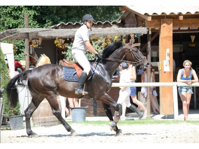 tiers ou demi pension sur cheval CSO  à Vourles Rhône