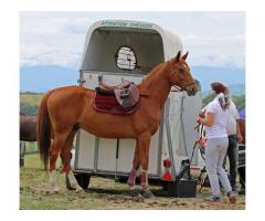 Vente cheval de sport