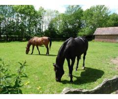 retraite pour chevaux