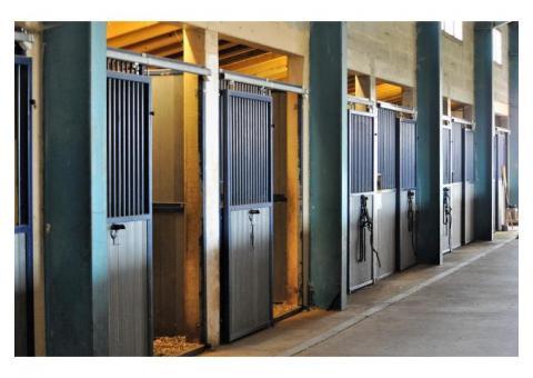 Western Equitation / Reining
