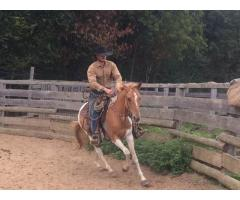 hongre Paint Horse