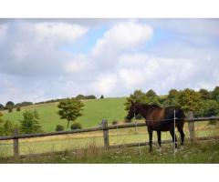 cherche cavalier pour travailler cheval polyvalent