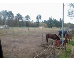 pension chevaux