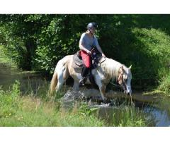 Saillie et IAC paint horse dunalino tobiano label loisir