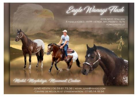 Saillie Appaloosa EAGLE WANAGI FLASH
